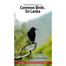 Common  Birds Of Sri Lanka